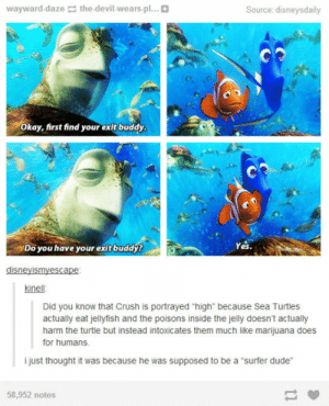 "Crush, Dude, and Finding Nemo: wayward-daze the-devil-wears-pl...  Source: disneysdaily  Okay, first find your exit buddy  Do you have your exit buddy?  Yes.  disneyismyescape  kinell  Did you know that Crush is portrayed ""high"" because Sea Turtles  actually eat jellyfish and the poisons inside the jelly doesn't actually  harm the turtle but instead intoxicates them much like marijuana does  for humans.  i just thought it was because he was supposed to be a ""surfer dude""  58,952 notes srsfunny:Something About Crush From Finding Nemo"