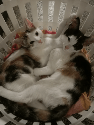 We adopted these two honey's. So much love.: We adopted these two honey's. So much love.