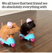 Best Friend, Best, and Friend: We all have that best friend we  do absolutely everything with  furballsinc We all have that ride or die friend 😂