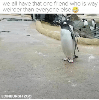 Facebook, facebook.com, and Relatable: we all have that one friend who is way  weirder than everyone else  그!  EDINBURGH ZOO Tag THAT friend and follow @buzzfeedanimals 😂. facebook.com-EdinburghZoo-