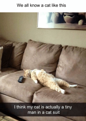 60 Photos That Were Funny Enough To Actually Make Me Laugh Out Loud - JustViral.Net: We all know a cat like this  I think my cat is actually a tiny  man in a cat suit 60 Photos That Were Funny Enough To Actually Make Me Laugh Out Loud - JustViral.Net