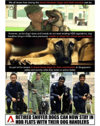 Dogs, Memes, and News: We all know how strong the bond between dogs and their owners  can be  However, as the dogs' sizes and breeds do not meet existing HDB regulations, dog  handlers living in HDBs were previously unable to adopt the retired service dogs.  As part of the means to thank these dogs for their contribution to Singapore's  safety and secuity while they were on active duties  RETIRED SNIFFER DOGS CAN NOW STAY IN  HDB FLATS WITH THEIR DOG HANDLERS This is PAW-SOME news!!! Well done to the authorities!!