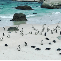 Love, Beach, and Penguin: We all know someone who would love this penguin beach! 🐧🏖