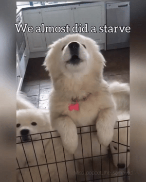 Club, Cute, and Dank: We almost did a starve  per You had one job karen By Poppet and the Wolf Pack  Join The Barked Club to see more cute dog videos!