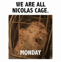 Mondays, Nicolas Cage, and Monday: WE ARE ALL  NICOLAS CAGE.  MONDAY we made it