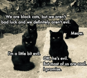 Bad, Cats, and Definitely: We are black cats, but we aren't  bad luck and we definitely aren't evil.  Meow  Um a little bit evil  OK he's evil.  Butmost of us are cool  0promise. https://t.co/XW8xmK58Ui