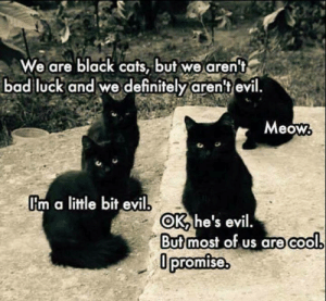 Im A Little: We are black cats, but we aren't  bad luck and we definitely aren't evil  Meow  Im a little bit evil  OK he's evil.  But most of us are cool  Opromise