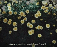 lost souls: We are just lost souls,aren't we? e