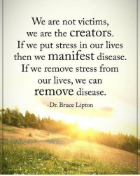 We are not victims, we are the creators. If we put stress in our lives then we manifest disease. If we remove stress from our lives, we can remove disease. - Dr. Bruce Lipton powerofpositivity: We are not victims,  we are the creators  If we put stress in our lives  then we manifest disease.  If we remove stress from  our lives, we can  remove disease.  Dr. Bruce Lipton We are not victims, we are the creators. If we put stress in our lives then we manifest disease. If we remove stress from our lives, we can remove disease. - Dr. Bruce Lipton powerofpositivity
