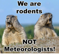 Happy Groundhog Day!: We are  rodents  NOT  Meteorologists Happy Groundhog Day!
