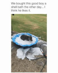 Good, Girl Memes, and Boy: We bought this good boy a  shell bath the other day... I  think he likes it.