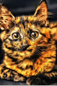 We call her Firecracker, 'cause she looks like a sparkly explosion of color.: We call her Firecracker, 'cause she looks like a sparkly explosion of color.