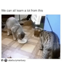 These alien cats learn faster than humans lol 👽😸 cats: We can all learn a lot from this  starburymarbury These alien cats learn faster than humans lol 👽😸 cats