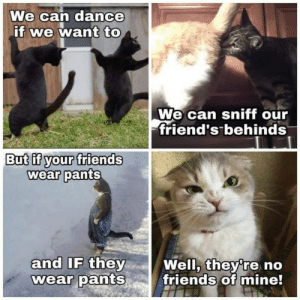 XD: We can dance  if we want to  We can sniff our  friend's behinds  But if your friends  wear pants  and IF they  wear pants  Well, they're no  friends of mine! XD