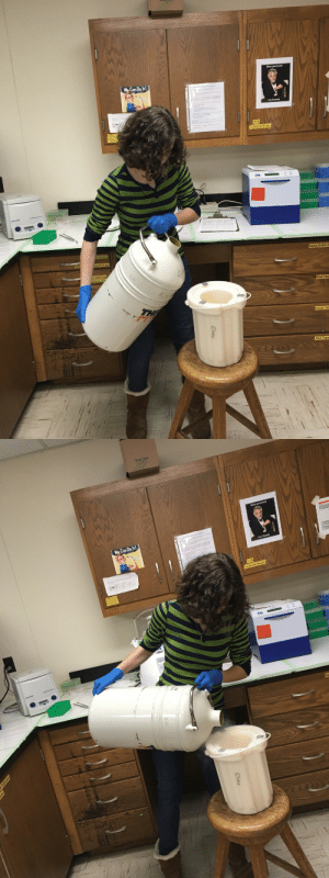 manyblinkinglights: nuggetemily:   spocks-brain: Flash freezing some samples with liquid nitrogen! wait. wait wait. they let you play with liquid nitrogen? okay. here is a HILARIOUS thing you can do with liquid nitrogen and 1 or 2 bottles of shaving cream. okay so step one is you dunk the shaving cream into the liquid nitrogen. completely submerge it and let it freeze. the shaving cream i mean. then take out the shaving cream. you probably don't need me to tell you this but for other people, you want to use tongs and safety gloves so you don't lose a hand or two doing this. now you have frozen shaving cream. what do you do with frozen shaving cream? well, first you have to peel off the canister so you have just the shaving cream floating free. you had to freeze it first so that it wouldn't explode when you do this part. now you have a frozen brick (or two if you did two) of shaving cream. so what do we do now? we put that shit inside someone's car we hate and/or love to prank on. as it warms, it will gradually expand to fill the entire vehicle.   oh god BLESS : We Can Do t  my friends  Tubes & Strips  xtra Rehll E  MS  Red Tips  reen Tig  e Tips   We Can Do t manyblinkinglights: nuggetemily:   spocks-brain: Flash freezing some samples with liquid nitrogen! wait. wait wait. they let you play with liquid nitrogen? okay. here is a HILARIOUS thing you can do with liquid nitrogen and 1 or 2 bottles of shaving cream. okay so step one is you dunk the shaving cream into the liquid nitrogen. completely submerge it and let it freeze. the shaving cream i mean. then take out the shaving cream. you probably don't need me to tell you this but for other people, you want to use tongs and safety gloves so you don't lose a hand or two doing this. now you have frozen shaving cream. what do you do with frozen shaving cream? well, first you have to peel off the canister so you have just the shaving cream floating free. you had to freeze it first so that it wouldn't explode when you do t