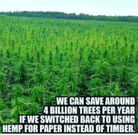 hemp: WE CAN SAVE AROUND  4 BILLION TREES PER YEAR  IF WE SWITCHED BACK TO USING  HEMP FOR PAPERINSTEAD OF TIMBER hemp