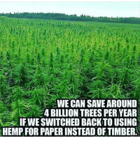 On the land in DR Congo, we will grow hemp 💚: WE CAN SAVE AROUND  4 BILLION TREES PERYEAR  IFWE SWITCHED BACK TO USING  HEMPFOR PAPERINSTEAD OF TIMBER. On the land in DR Congo, we will grow hemp 💚