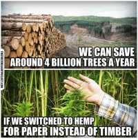💭 Too bad the U.S. Gov't banned Hemp farming in 1937... MarihuanaTaxActOf1937 💭🤔🤔🤔💭 Join Us: @TheFreeThoughtProject 💭 TheFreeThoughtProject EarthDay Hemp Deforestation 💭 LIKE our Facebook page & Visit our website for more News and Information. Link in Bio... 💭 www.TheFreeThoughtProject.com: WE CAN SAVE  AROUND 4 BILLIONTREESAYEAR  IF WE SWITCHED TO HEMP  FOR PAPERINSTEADOF TIMBER 💭 Too bad the U.S. Gov't banned Hemp farming in 1937... MarihuanaTaxActOf1937 💭🤔🤔🤔💭 Join Us: @TheFreeThoughtProject 💭 TheFreeThoughtProject EarthDay Hemp Deforestation 💭 LIKE our Facebook page & Visit our website for more News and Information. Link in Bio... 💭 www.TheFreeThoughtProject.com