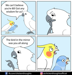 The wise old cockatoo [OC]: We can't believe  you're 80! Got any  wisdom for us?  The bird in the mirror  was you all along  chicken thoughts  f fb.com/chickenthoughts  @chickenthoughtsofficial The wise old cockatoo [OC]