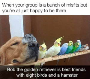 We challenge you to take just five minutes out of your day to scroll through a little uplifting content! It'll be worth it, we promise. #Memes #Heartwarming #Uplifting #Cute #Animals: We challenge you to take just five minutes out of your day to scroll through a little uplifting content! It'll be worth it, we promise. #Memes #Heartwarming #Uplifting #Cute #Animals