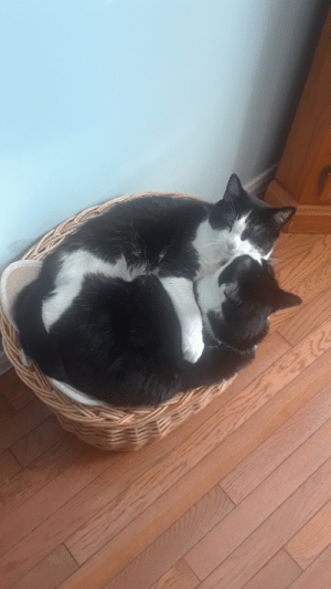 we do own 2 baskets: we do own 2 baskets