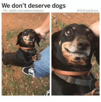 Cute, Dogs, and Funny: We don't deserve dogs  Pic: reddit u/strawberryhichew  @DrSmashlove @drsmashlove has cute memes