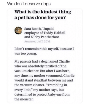 """Charlie, Dogs, and Monster: We don't deserve dogs  What is the kindest thing  a pet has done for you?  Sara Booth, Unpaid  employee of Teddy Halftail  and Nibby Pantherfoot  Answered Jul 7, 2016  I don't remember this myself, because I  was too young.  My parents had a dog named Charlie  who was absolutely terrified of the  vacuum cleaner. But after I was born  any time my mother vacuumed, Charlie  would stand steadfast between me and  the vacuum cleaner. """"Trembling in  every limb,"""" my mother says, but  determined to protect baby-me from  the monster. Dogs Being Bros"""
