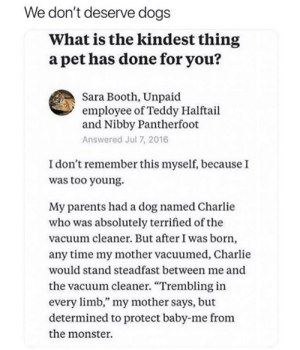 """Charlie, Dogs, and Memes: We don't deserve dogs  What is the kindest thing  a pet has done for you?  Sara Booth, Unpaid  employee of Teddy Halftail  and Nibby Pantherfoot  Answered Jul 7, 2016  I don't remember this myself, because I  was too young.  My parents had a dog named Charlie  who was absolutely terrified of the  vacuum cleaner. But after I was born,  any time my mother vacuumed, Charlie  would stand steadfast between me and  the vacuum cleaner. """"Trembling in  every limb,"""" my mother says, but  determined to protect baby-me from  the monster"""