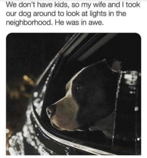awesomacious:  Those are good parents: We don't have kids, so my wife and I took  our dog around to look at lights in the  neighborhood. He was in awe. awesomacious:  Those are good parents