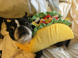 Never, Lettuce, and This: We don't taco bout this. Lettuce pretend it never happened..