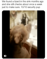 Memes, Reddit, and Girl: We found a lizard in the sink months ago  and she still checks about once a week  just to make sure. 10/10 security pup Extremely good girl doubles as fierce dragon-hunter 😍👏😂 (📹: reddit u-VelveteenGambit)