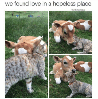Memes, We Found Love, and 🤖: we found love in a hopeless place  @DrSmashlove Awe calve kitter Ha ha. I'm weak flatlined dead pettypost nochill teamnoharmdone noharmdone