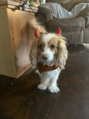 We got bored today so the Halloween costumes got pulled out. Meet Roo, my little devil 😈: We got bored today so the Halloween costumes got pulled out. Meet Roo, my little devil 😈