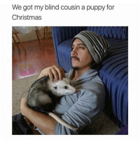 Christmas, Memes, and Puppy: We got my blind cousin a puppy for  Christmas How nice 😄