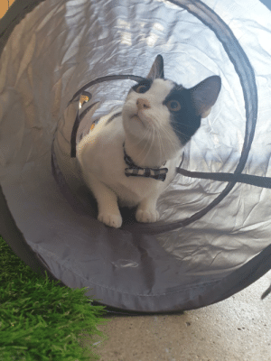 Today, Got, and Cat: We got our cat a tunnel today