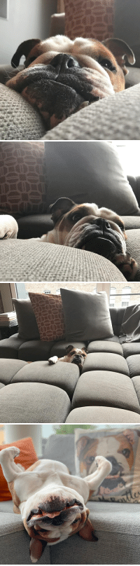 """Dogs, Bentley, and Couch: We had a """"no dogs on the couch"""" rule. Bentley would put his face against the couch and stare at us while we tried to watch TV. Never give up on your dreams people. You'll get there eventually!"""