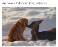 Funny, Opera, and Anyone Know: We have a forbidden love, Rebecca. Anyone know what soap opera this is?