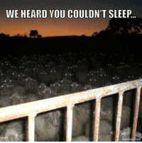 Dank, Sleeping, and Sleep: WE HEARD YOU COULDN'T SLEEP.  MEMEMEAPPCOM