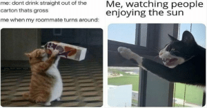 We interrupt your usual broadcast with a small and humble cat meme dump.#cats #funnycats #catmemes #funnymemes #animalmemes: We interrupt your usual broadcast with a small and humble cat meme dump.#cats #funnycats #catmemes #funnymemes #animalmemes