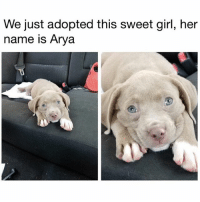 (@doggosdoingthings) posts puppers doing adorably cute things. (📸: Reddit u-twerkinwhiteboy): We just adopted this sweet girl, her  name is Arya (@doggosdoingthings) posts puppers doing adorably cute things. (📸: Reddit u-twerkinwhiteboy)