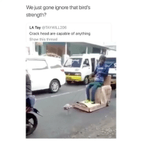 Head, Lmao, and Taken: We just gone ignore that bird's  strength?  LA Tay @TAYWILL206  Crack head are capable of anything  Show this thread LMAO WHAT IS THIS AND WHERE IS THIS TAKEN??? TAKE THE BIRD TO ELLEN