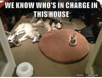 Memes, 🤖, and Sites: WE KNOW WHO'S IN CHARGE IN  THIS HOUSE  funny  CAT  site.com (Sakari)