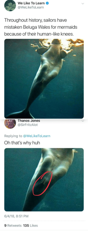 Huh, History, and Mermaids: We Like To Learn  WeLikeToLearn  Throughout history, sailors have  mistaken Beluga Wales for mermaids  because of their human-like knees.   Thanos  Jones  @SirFritzAlot  Replying to @WeLikeToLearn  Oh that's why huh  6/4/18, 8:51 PM  9 Retweets 135 Likes 😔