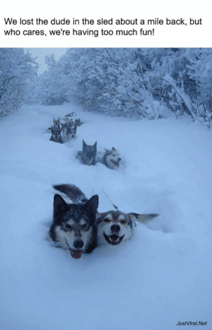 30 Funny Animal Pictures To Distract You From Whatever You're Supposed To Be Doing - JustViral.Net: We lost the dude in the sled about a mile back, but  who cares, we're having too much fun!  JustViral.Net 30 Funny Animal Pictures To Distract You From Whatever You're Supposed To Be Doing - JustViral.Net