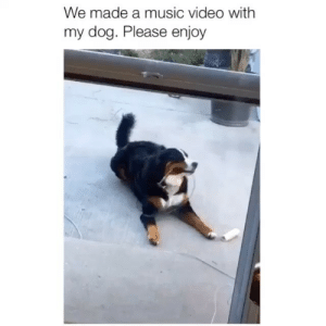 Love, Memes, and Music: We made a music video with  my dog. Please enjoy I love this 😂 Credit: @jacobbartoli