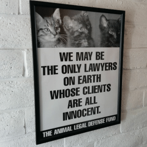 dizzyotter: when i first saw this i thought the kittens were the lawyers  What makes you think they're not?: WE MAY BE  THE ONLY LAWYERS  ON EARTH  WHOSE CLIENTS  ARE ALL  INNOCEVT  THE ANIMAL LEGAL DEFENSE FUND dizzyotter: when i first saw this i thought the kittens were the lawyers  What makes you think they're not?