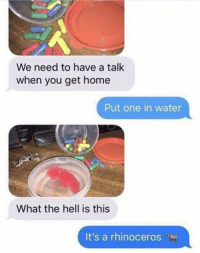 Drugs, Home, and Kids: We need to have a talk  when you get home  Put one in water  What the hell is this  It's a rhinoceros Talk to your kids about drugs!