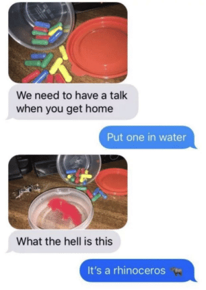 Home, Water, and Hell: We need to have a talk  when you get home  Put one in water  What the hell is this  It's a rhinoceros meirl