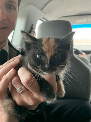 Reddit, Vans, and Hotel: We rescued this kitten than was tucked up on top of a hotel van's spare tire. Reddit, meet Limo.