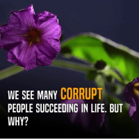 Memes, Karma, and Corruption: WE SEE MANY CORRUPT  PEOPLE SUCCEEDING IN LIFE. BUT  WHY? Someone who is undeserving and corrupt, becomes successful. But, the one who is deserving and hardworking has to toil forever. Why? If Karma exists, why does this disparity take place? This video may be an answer to questions like these.  #Karma #Hinduism #Life #Honesty #Unfair